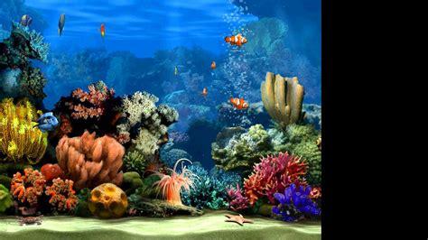 live screensavers for windows live marine aquarium screensaver 2 0 youtube
