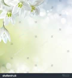 Lily Easter Flower - online image amp photo editor shutterstock editor