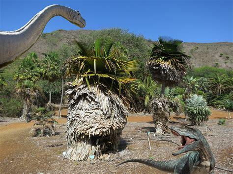 koko crater botanical gardens koko crater botanical gardens oahu surf and trails koko