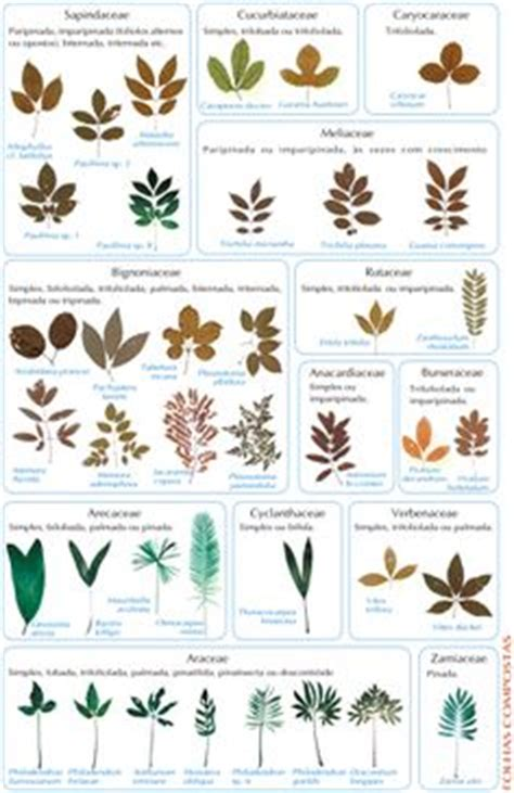 a guide to identifying your home d 233 cor style oak leaf identification chart plant identification