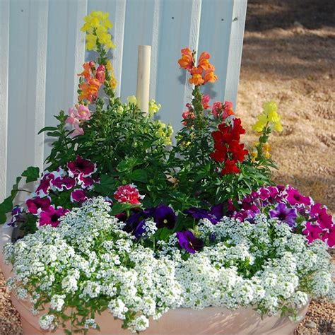 Outside Flower Pots 56 Best Images About Potted Flower Ideas On