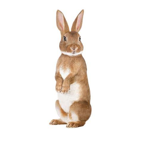 Dress Rabbit Kelinci rabbit wall sticker