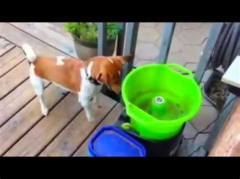 automatic thrower for dogs diy automatic thrower i godoggo fetch machine for dogs in how to save