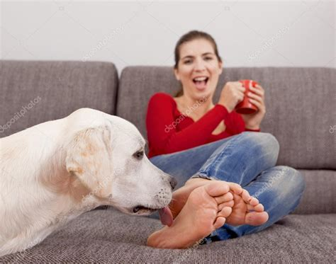 my dog licks the couch dog licking the toes stock photo 169 ikostudio 13654295