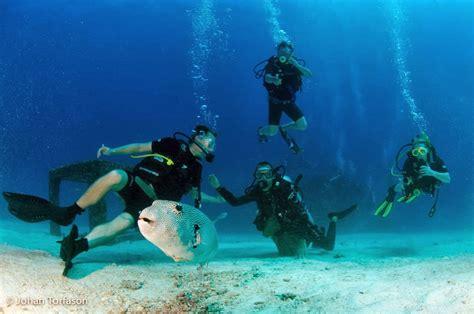 dive phuket diving phuket with sea divers november 2013