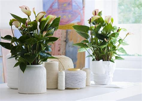 Ideas For Indoor Potted Plants Design 20 Unforgettable Indoor Plant Displays Ideas