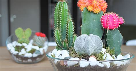 Vase Sepeda Anyaman Bunga Hias the dainty by mandy fisher diy mini succulent and cacti garden