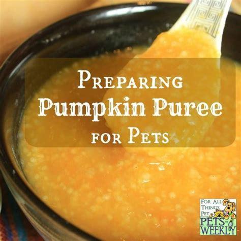 pumpkin puree for dogs preparing pumpkin puree for pets