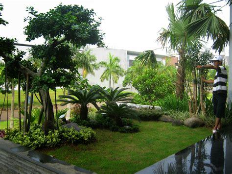 Jual Bibit Bunga Gumitir Di Bali tukang taman terpercaya di jakarta jual tanaman hias murah