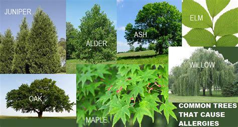 allergy tree allergies does my seasonal allergies