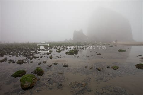 exploring tidepools in the fog cannon beach photo