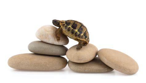 why does my eat rocks my turtle is rocks veterinarians seva call