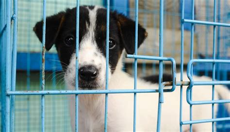 does petco sell dogs minnesota bans selling dogs and cats in pet stores