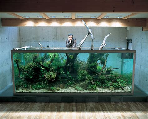 aqua forest aquarium ideas studio design gallery