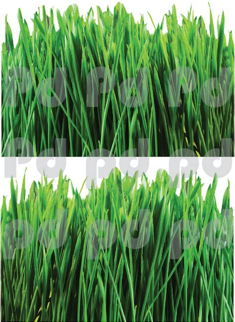 Grass Stickers grass wall mural decal garden wall decal murals