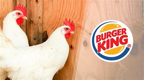 money with chickens how to make up to 12k a year with just 15 chickens books burger king says it will stop serving chickens