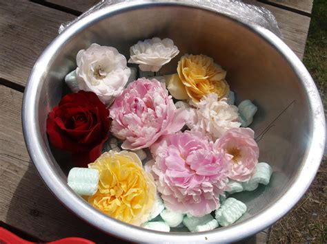 2 pack flower drying silica gel flower preservative ebay my garden
