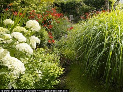 are hydrangeas poisonous to dogs hydrangea arborescens annabelle crocosmia lucifer miscanthus euphorbia