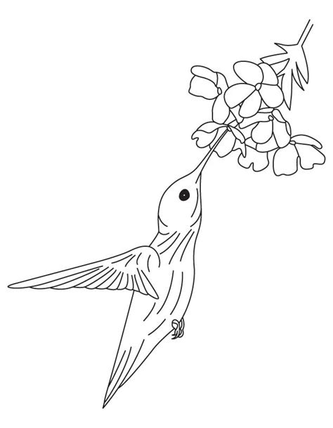 coloring pages hummingbirds flowers free hummingbird pictures coloring home