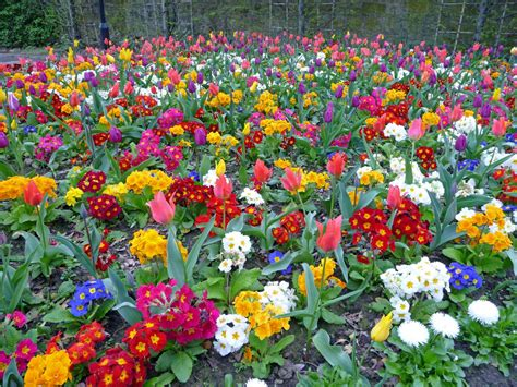 spring flower garden colourful spring garden glasgow scotland scottish tour guide s blog