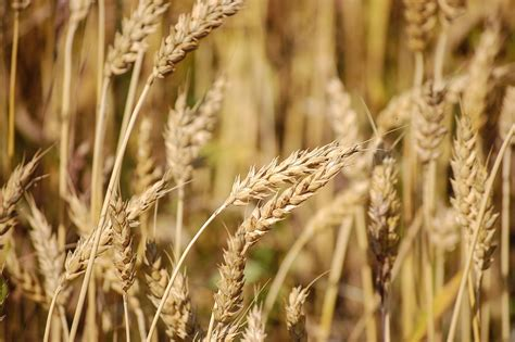 whole grains and health the surprising impact of whole grains on health health
