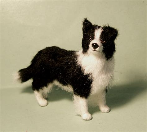 border collie puppies colorado miniature border collies www imgkid the image kid has it
