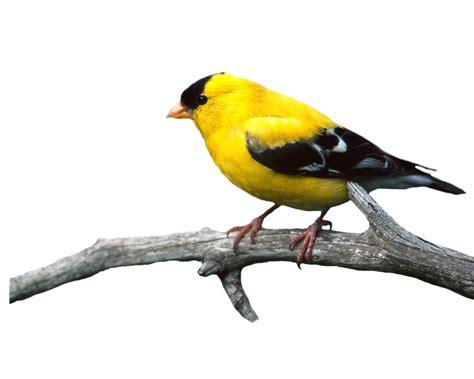 cara mengganti format gambar jpg menjadi png bahan edit foto format png burung