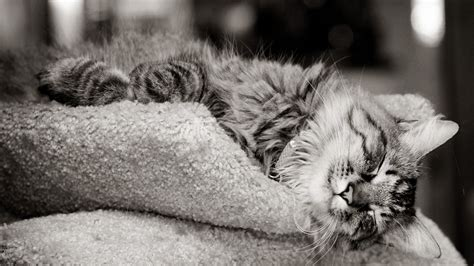 monochrome animals animals cats kittens monochrome outer space wallpaper