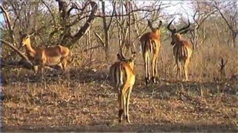 film jangal love mp3 jangal animal vidio mp4 full 3gp mp3 mp4 hd mkv download