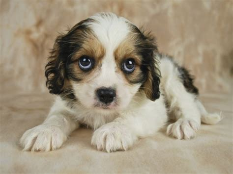 sorry puppy moto x cyber monday deal to be available again motorola says sorry for screwing it up