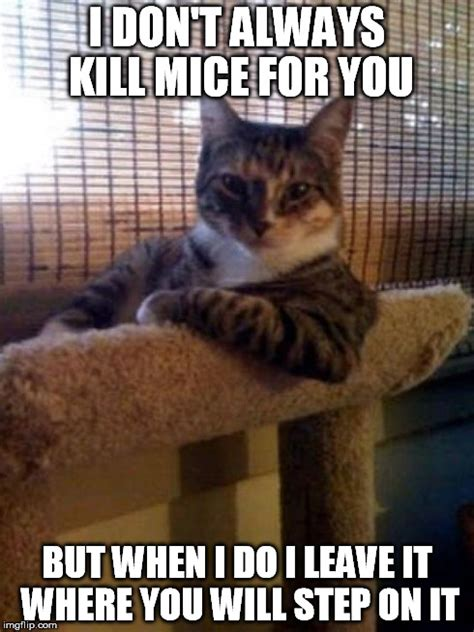 Sexy Cat Memes - the most interesting cat in the world meme imgflip