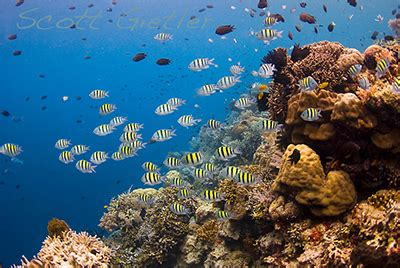 into the blue underwater sounds of nature for relaxation underwater reefscape