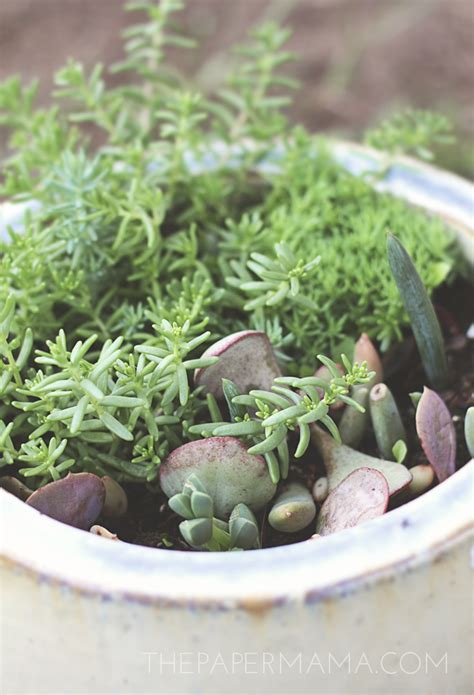 How To Propagate Succulents From Cuttings And Offsets - propagating succulents from leaves succulents and 28