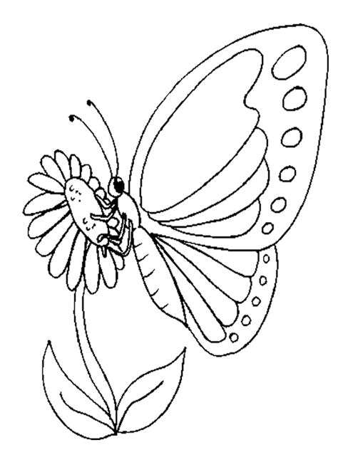 butterfly coloring sheet homeschool helper coloring home