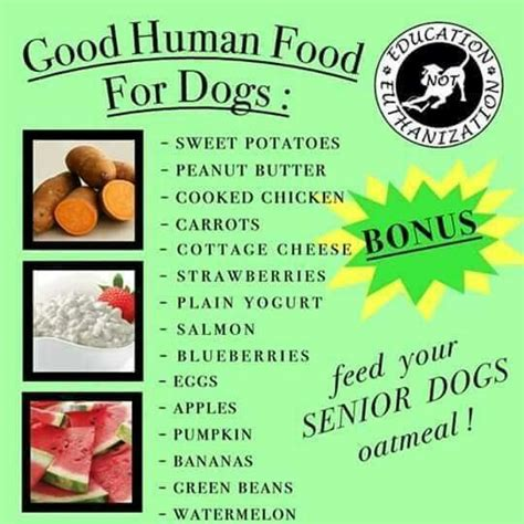 healthy human food for dogs 17 best images about health tips ideas on aid for dogs and