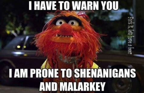 Funny Muppet Memes - 48 best images about animal muppet quotes on pinterest