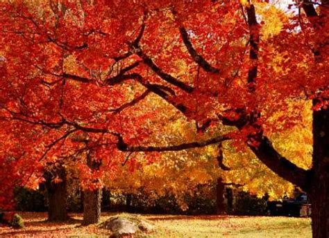 Color Changing Tree - best places to visit fall foliage
