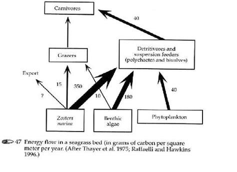 Rantai Hewan 30 ekosistem padang lamun di teluk banten pman and the