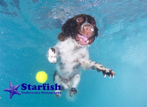 underwater dogs underwater dogs starfish underwater photography
