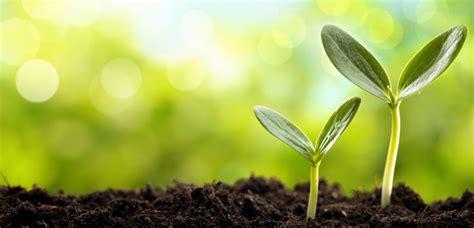 vegetables planting  seeds tlc garden centers