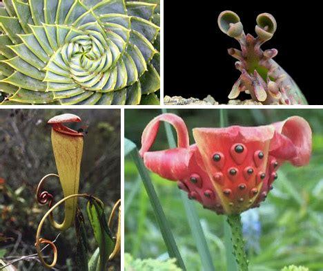 strange plants xcitefun net