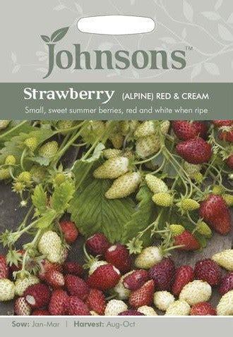 Jual Bibit Stroberi Strawberry Seeds jual benih strawberry alpine 150 biji