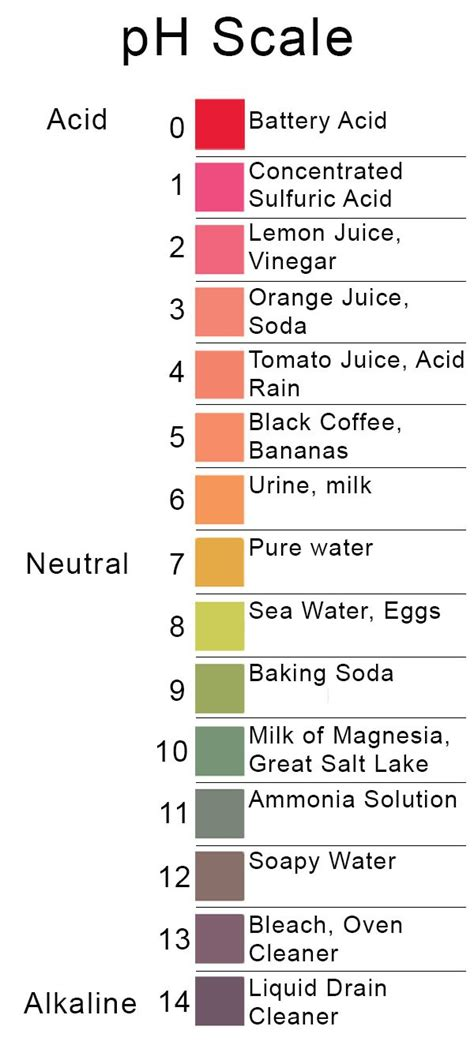 acid base ph scale the gallery for gt ph scale with household items