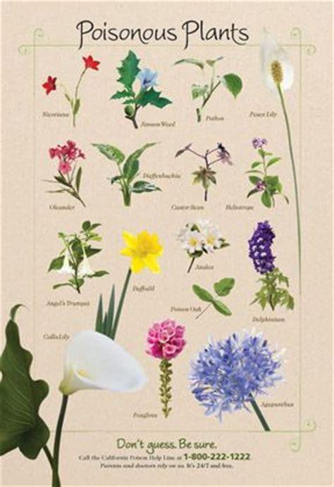 whats   garden  poisonous plant poster shows  dangerous beauties