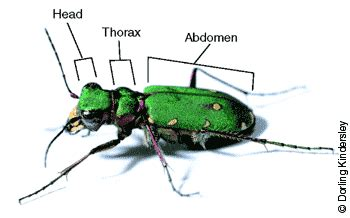 how many body sections do insects have prentice hall biology