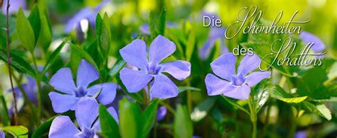Garten Pflanzen Schattig by Staudenkulturen Stade Der Stauden Shop Im
