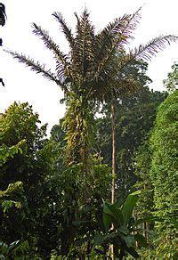 enau wikipedia bahasa indonesia ensiklopedia bebas