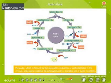 design lab on respiration respiration in plants youtube