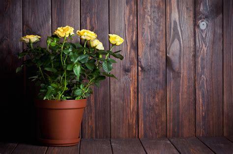 piante da giardino molto profumate piante molto profumate 5 idee per un balcone inebriante
