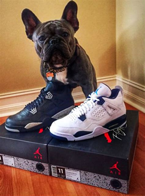 jordans dogs gio gonzalez and his got a bunch of air jordans early sole collector